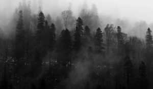 Beautiful black and white foggy forrest